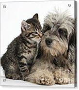 Animal Friends Acrylic Print