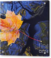 Autumn Leaf On The Water Acrylic Print