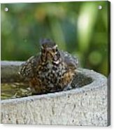 Bird Bath Fun Time Acrylic Print