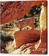 Bobcat Acrylic Print