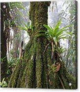 Bromeliad Bromeliaceae And Tree Fern Acrylic Print by Cyril Ruoso