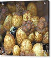 Bumblebee Nest Acrylic Print