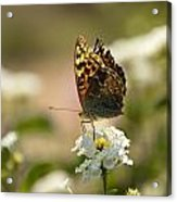 Butterfly On Blooming Flowers Acrylic Print