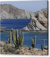 Cardon Pachycereus Pringlei Cacti Acrylic Print