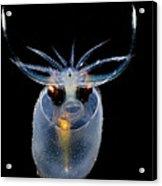 Cockatoo Squid Acrylic Print