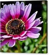 Colorful Flower Acrylic Print
