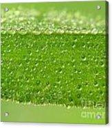 Drops In Leaf Acrylic Print