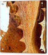Dry Brown Aloe Vera Leaf Acrylic Print