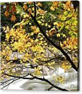 Fall Along Williams River Acrylic Print by Thomas R Fletcher