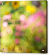 Flower Garden In Sunshine Acrylic Print