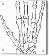Hand And Wrist Bones Acrylic Print