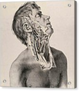 Historical Anatomical Illustration Acrylic Print