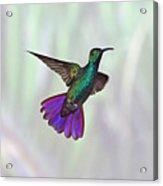 Hummingbird Acrylic Print by David Tipling