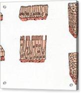 Illustration Of Epithelium Types Acrylic Print