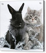 Kitten And Rabbit Getting Into Tinsel Acrylic Print