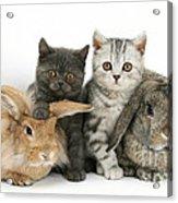 Kittens And Rabbits Acrylic Print