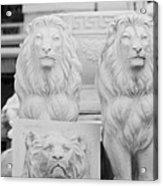 3 Lions Acrylic Print