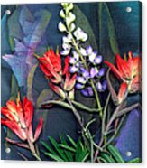 Lupin And Indian Paintbrush Acrylic Print