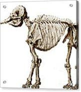 Mastodon Skeleton Acrylic Print by Science Source