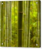 Mystical Bamboo Acrylic Print