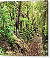 Native Bush Acrylic Print