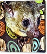 Nosey Acrylic Print