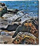 3 Of Mother Natures Finest  Textures Acrylic Print