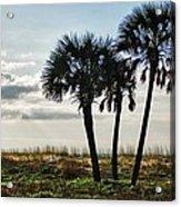 3 Palms On The Beach Acrylic Print