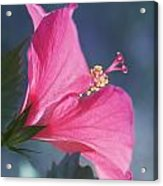 Pink, Blue And Green Acrylic Print