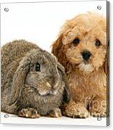 Puppy And Rabbit Acrylic Print