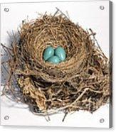 Robins Nest With Eggs Acrylic Print