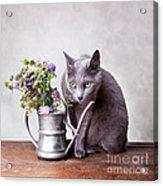 Russian Blue Acrylic Print