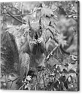 Squirrel Dinner Acrylic Print