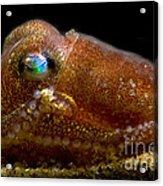 Stubby Squid Acrylic Print