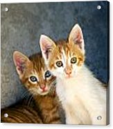 Sweet Cats Acrylic Print