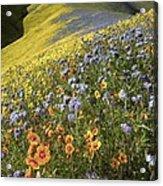 Wildflowers, California Acrylic Print