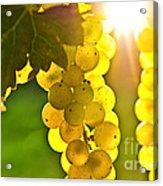 Yellow Grapes Acrylic Print