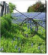 Ennis Tx Bluebonnet Trails Acrylic Print