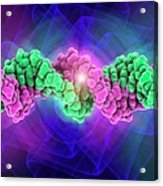 Dna Molecule, Artwork Acrylic Print