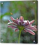 3d Daisy With Bee Acrylic Print