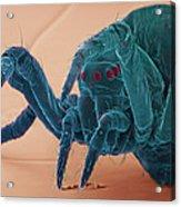 Baby Spider, Sem Acrylic Print