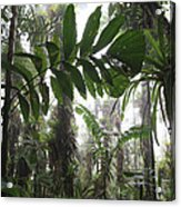 Bromeliad Bromeliaceae And Tree Fern Acrylic Print by Cyril Ruoso