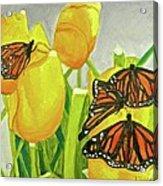 4 Butterflies Acrylic Print