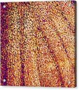 Butterfly Wing, Sem Acrylic Print