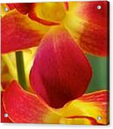 Dendribium Malone Or Hope Orchid Flower Acrylic Print