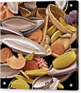 Diatoms, Sem Acrylic Print by Steve Gschmeissner