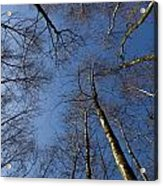 Epping Forest Trees Acrylic Print