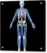 Female Skeleton, Artwork Acrylic Print