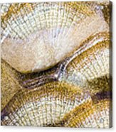 Fish Scales Background Acrylic Print