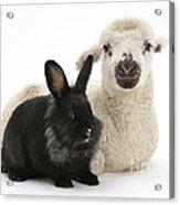 Lamb And Rabbit Acrylic Print